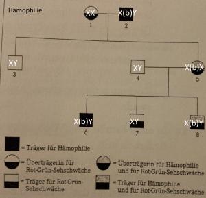 Fallbeispiel-einer-Vererbung-der-Hämophilie-Zuordnung-300x289 Stammbaumanalysen (neurodegenerative Krankheit, Genotypen, Vererbung)
