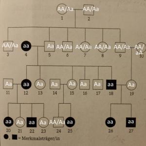 Modellstammbaum-einer-genetisch-bedingten-Veränderung-der-Hämoglobin-Struktur-Zuordnung-300x300 Stammbaumanalysen (neurodegenerative Krankheit, Genotypen, Vererbung)