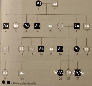 Modellstammbaum-einer-neurodegenerativen-Krankheit-Zuordnung-300x279 Stammbaumanalysen (neurodegenerative Krankheit, Genotypen, Vererbung)